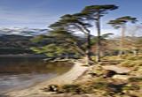 Loch Eck Argyll