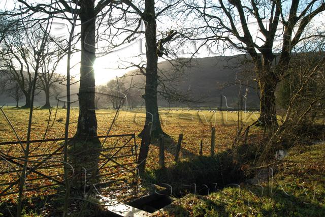 Winter Sun, Glendaruel
