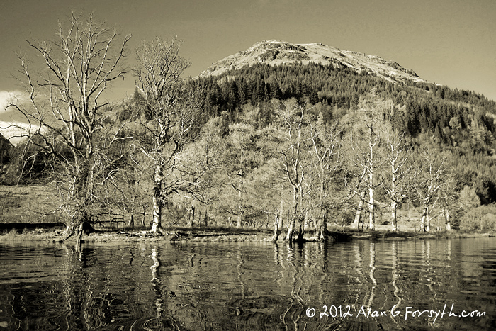winter trees, Loch Eck, Argyll